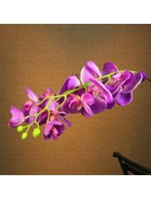 HF1048 - Bunga Phalaenopsis