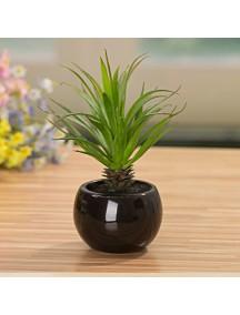 HF1218 - Dekorasi Tanaman Bonsai Ball Pot